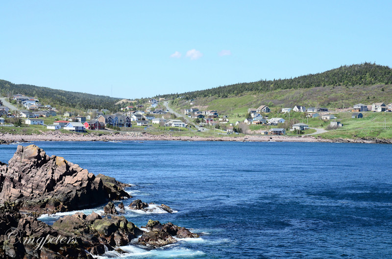 Whales-Cape Spear-10