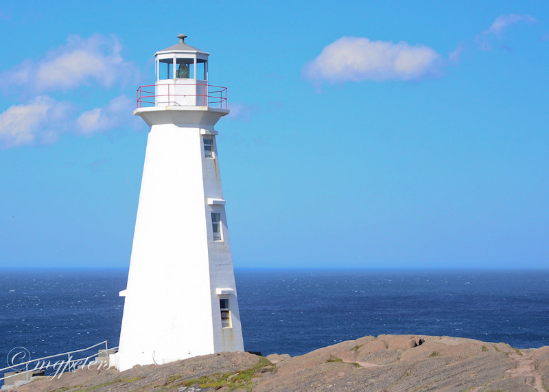 Whales-Cape Spear-23