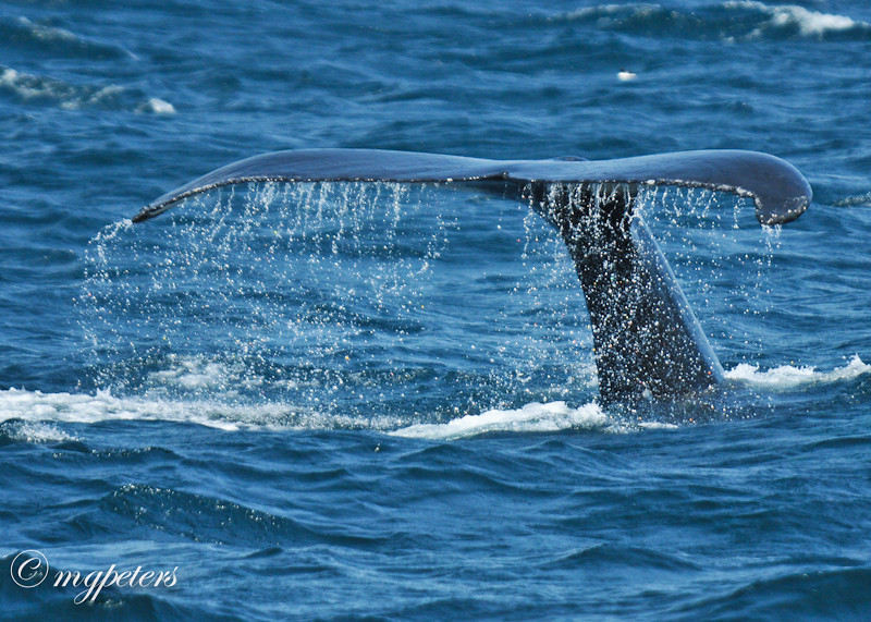 Whales-Cape Spear-26