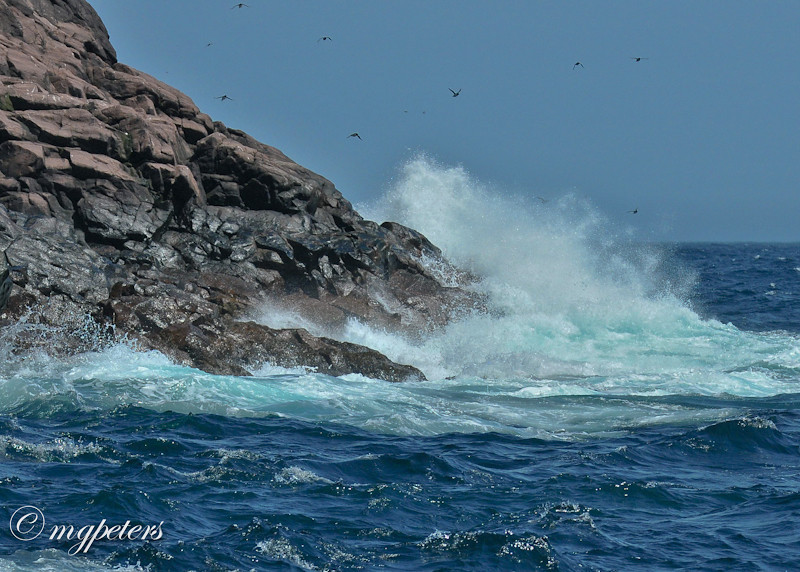 Whales-Cape Spear-17