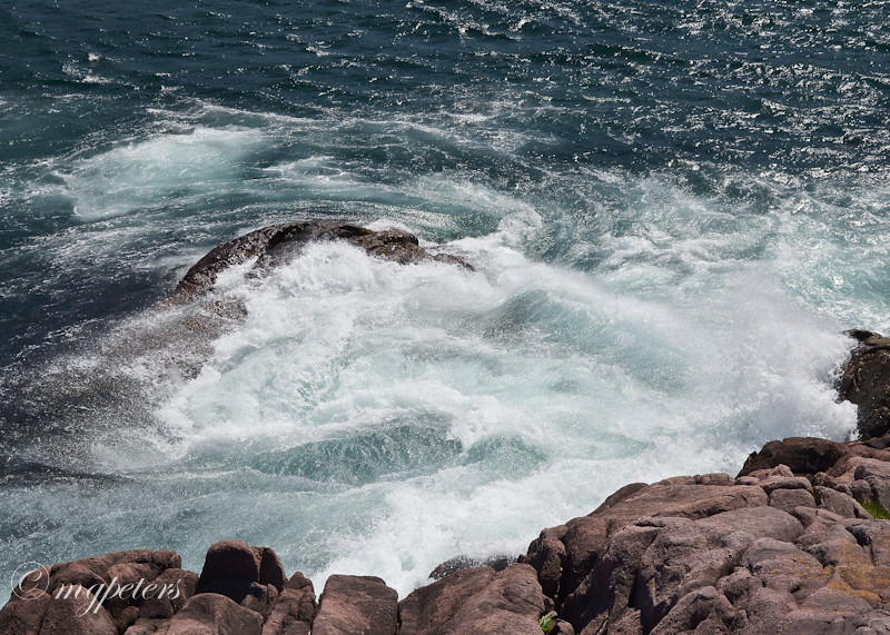 Whales-Cape Spear-6