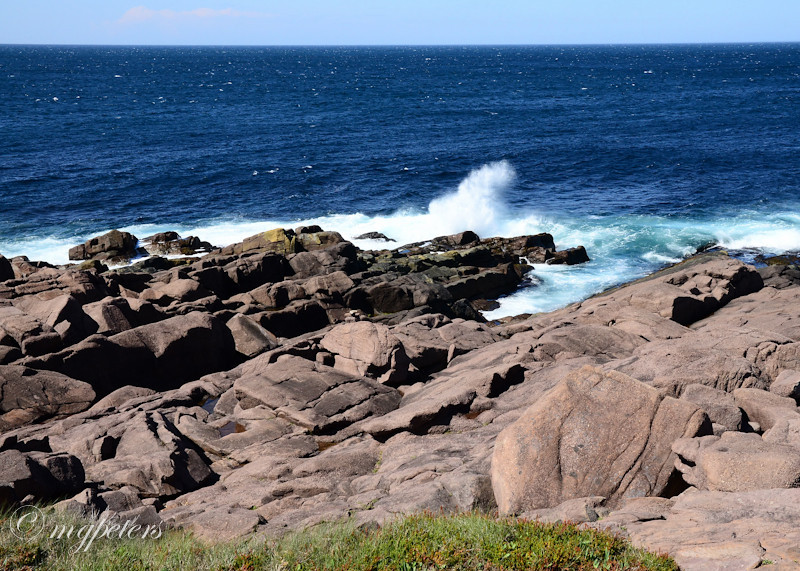 Whales-Cape Spear-14