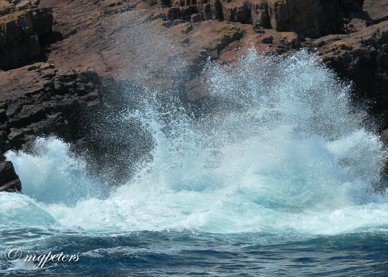 Whales-Cape Spear-5