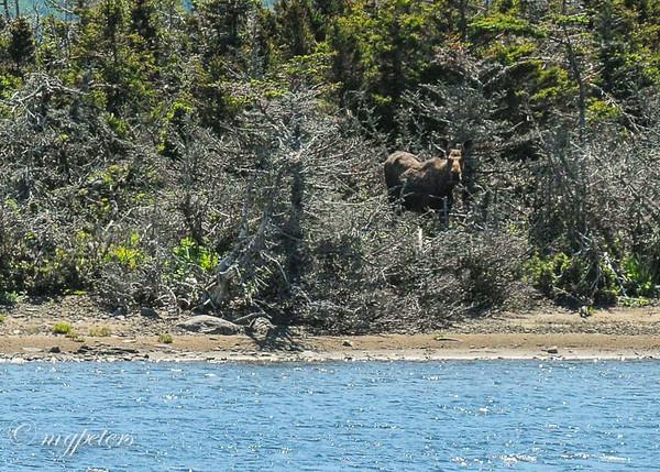 June 20 West-Brook-Pond