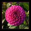 From the Dahlia garden outside the conservatory