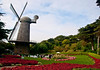 North Windmill towers majestically over Queen Wilhelmina Tulip Garden