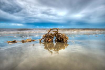 Washed up Seaweed on Sea Island GA
