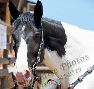 Horse head 0512 527