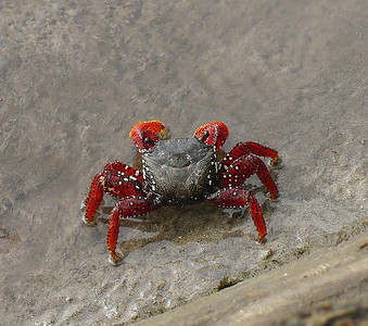 Many Types of Little Crabs