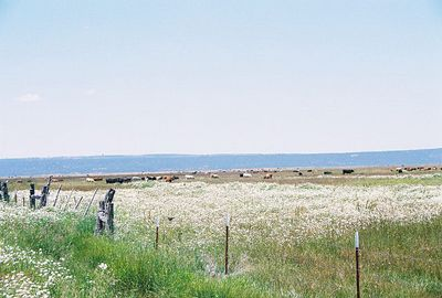 7/3/05 Pastures off County Rd 48 to Goose Lake, Modoc County, CA