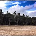 Skovbryn. Oktober på Gotland