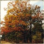 Oktober på Gotland