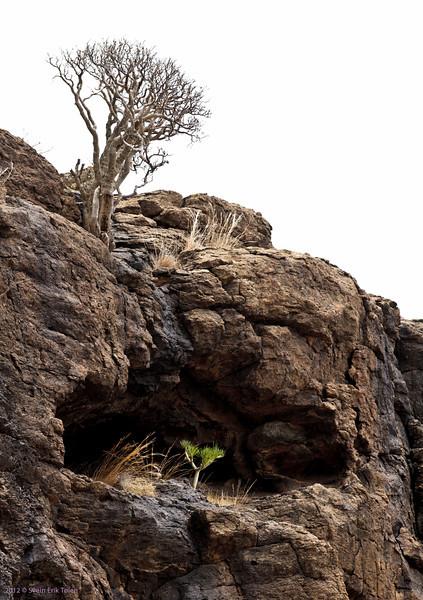 Dry tree, green tree<br /> Puerto Rico backlands