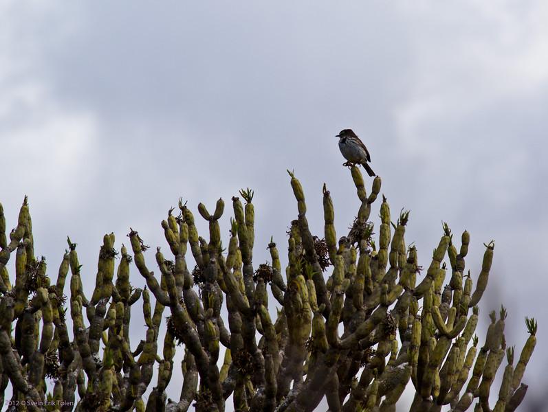 Bird on a cactus...