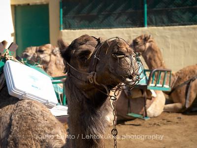5. Kamelikyyti - Camel ride