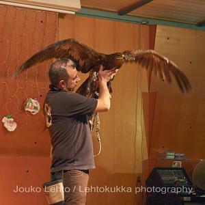 Hawk show inside