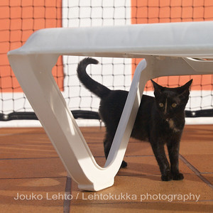 Kissanpoikia - Kittens (Black cats)