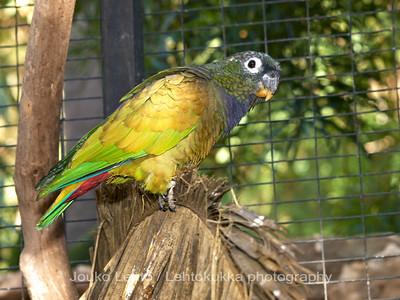 Papukaijatalo - Parot haouse: Palmitos park, Gran Canary