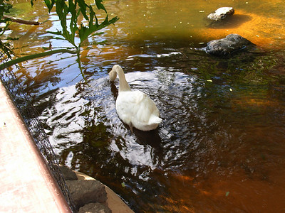 Palmitos park, Gran Canary