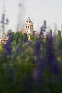 Lavender, Granda