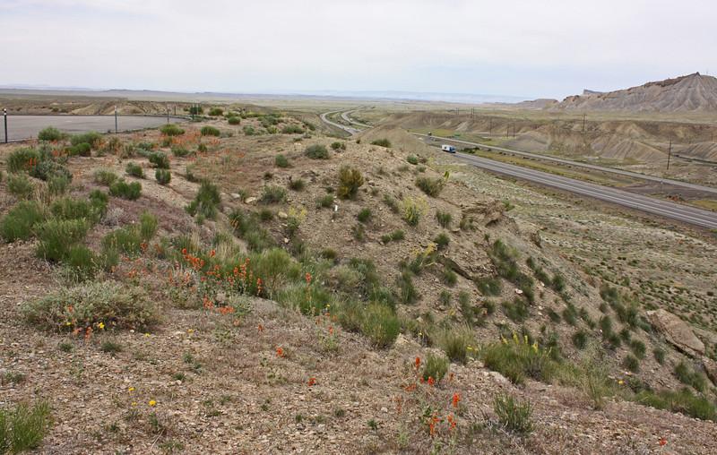Another Utah vista point - desert mallow