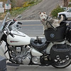 Austin, NV - custom biker dog seat