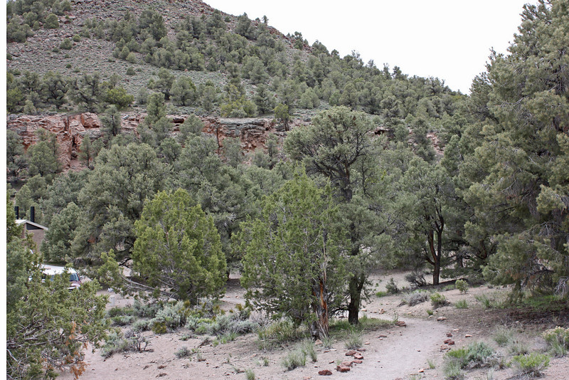 Petroglyph site, highway 50 - picnic area