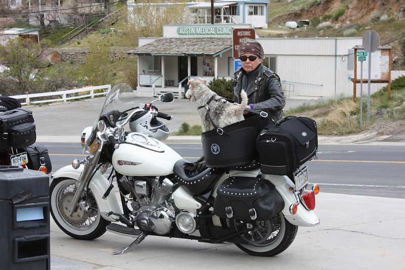 Austin, NV - custom biker dog seat