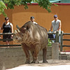 Denver Zoo - rhino