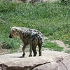 Denver Zoo - hyena