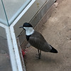 Denver Zoo - self-referential bird