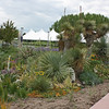 Denver Botanical Garden - dry garden border