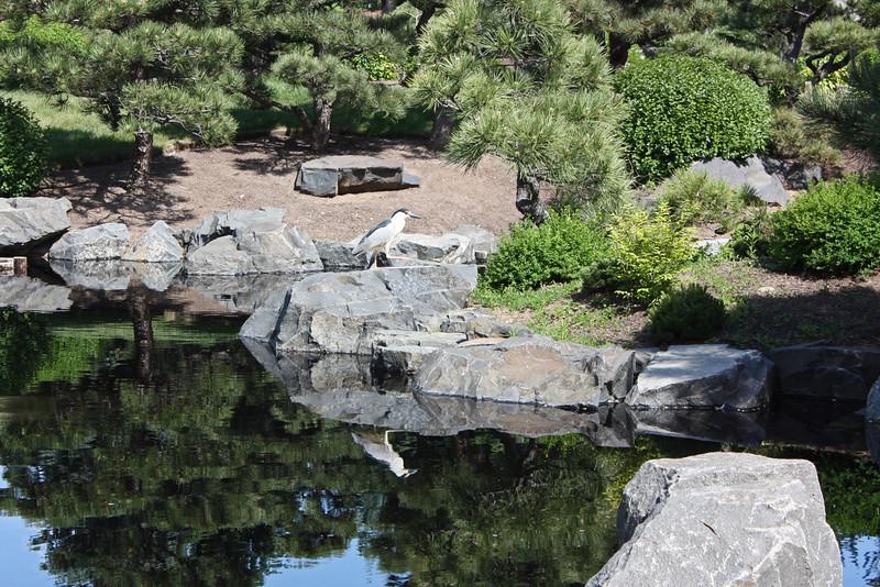 Denver Botanical Garden - Japanese garden and heron