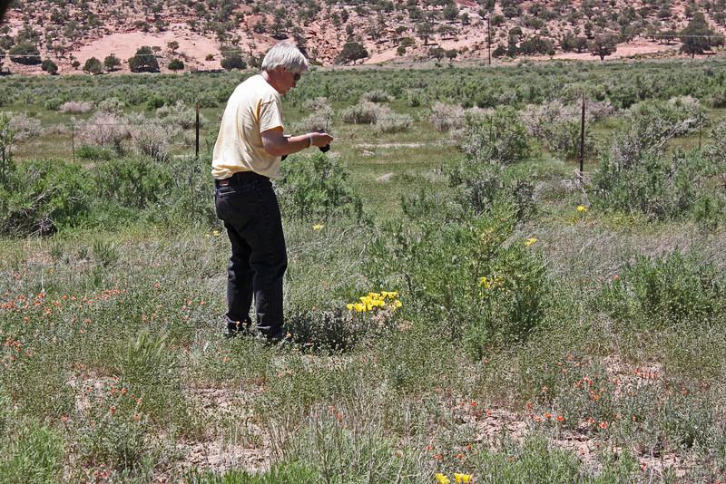 Northern Arizona - Jim photographing Mariposa lilies