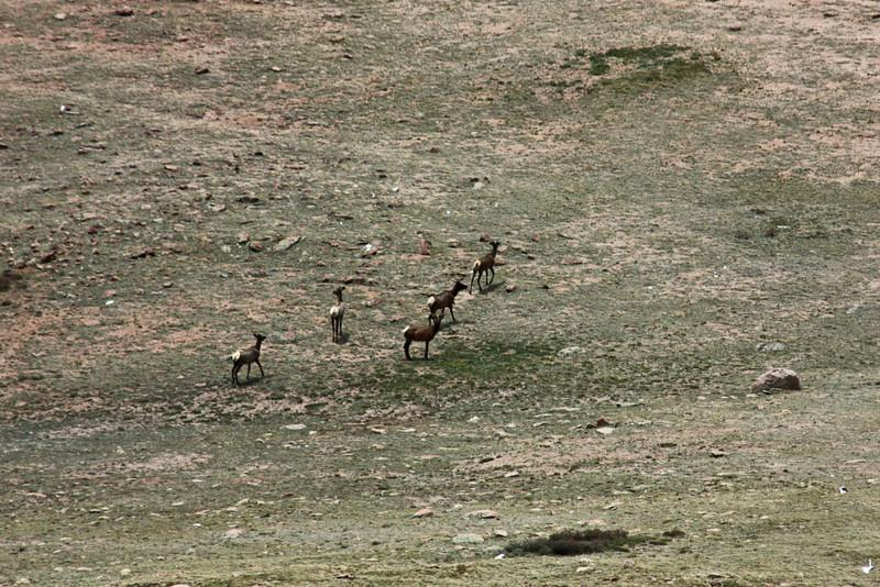 view from Pike's Peak cog railway - elk