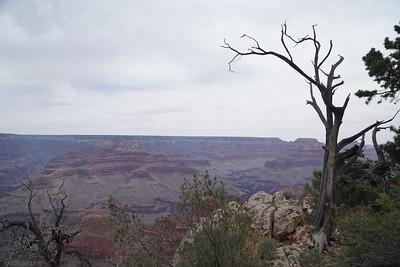 Grand Canyon NP May 2018