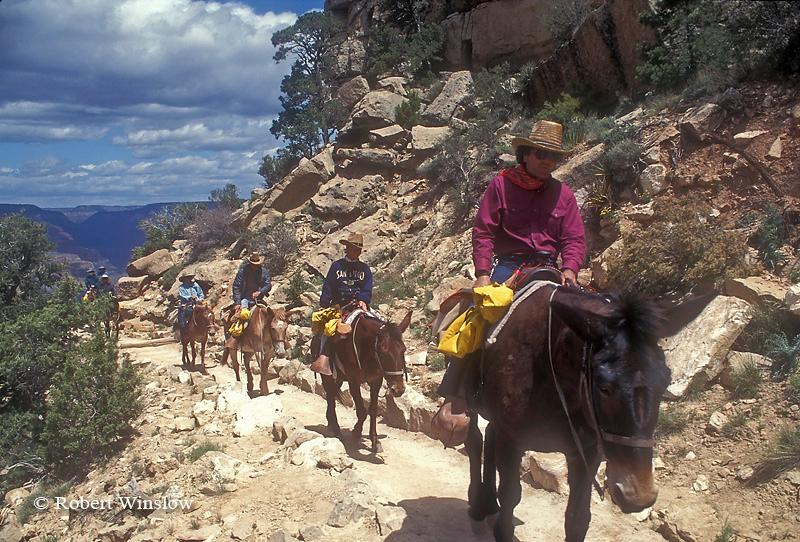 NoMR, Tourists on Mules, South Kaibab Trail, Grand Canyon National Park, Arizona, USA, North America