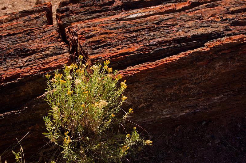 Detail, Petrified Forest National Park, Arizona.