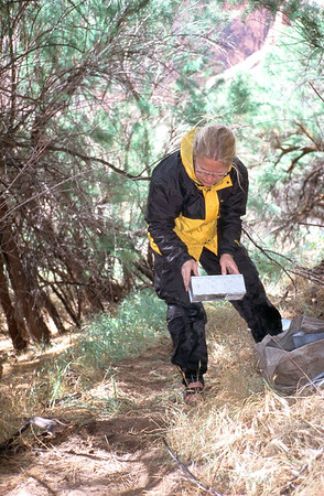 Assistant releasing rodents from the live traps after data has been collected.