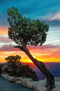 Twisted pine on the south rim. Took a while to get the tourists out of the way.