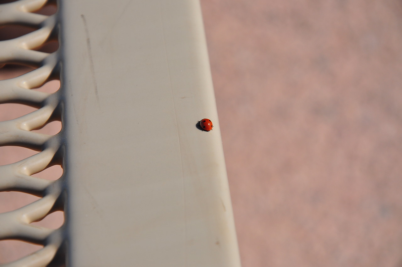 A random ladybug.  That's so me.