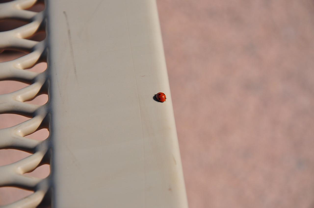 A random ladybug.  That's so me.