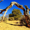 3/18 2:33pm.  Many tourists pass by this but never see the dead arched tree trunk.  I was bored and walked over a small hill, found it, reminded me the famous Arch NP image, walked around and this is the only shot I can get.  A cookie cutter framing shot.