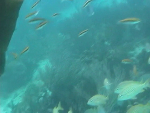 Grand Cayman Video - 04