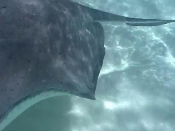 Grand Cayman Video - 03