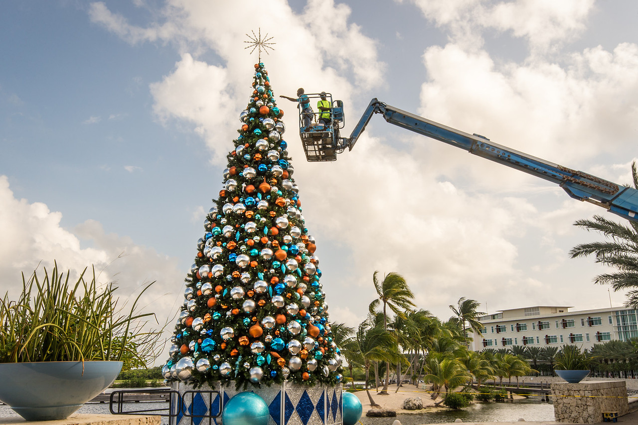 Decorating Christmas Tree at Camana Bay, Grand Cayman - November 2013