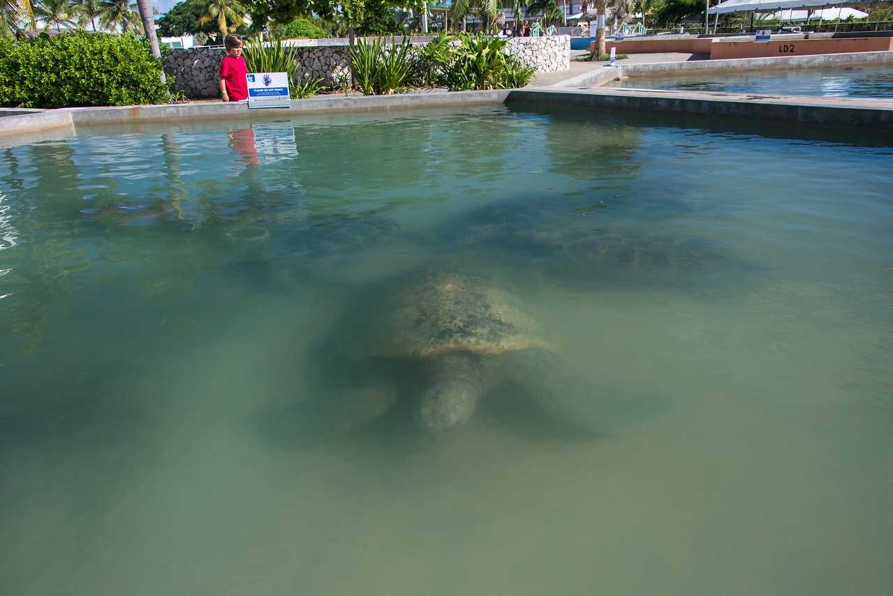 Turtle Farm, Grand Cayman - November 2013