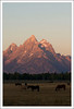 Grand Teton with horses.<br /> <br /> Grand Teton National Park