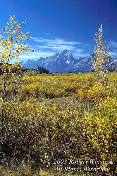 Autumn, Grand Tetons, Grand Teton National Park, Wyoming, USA, North America