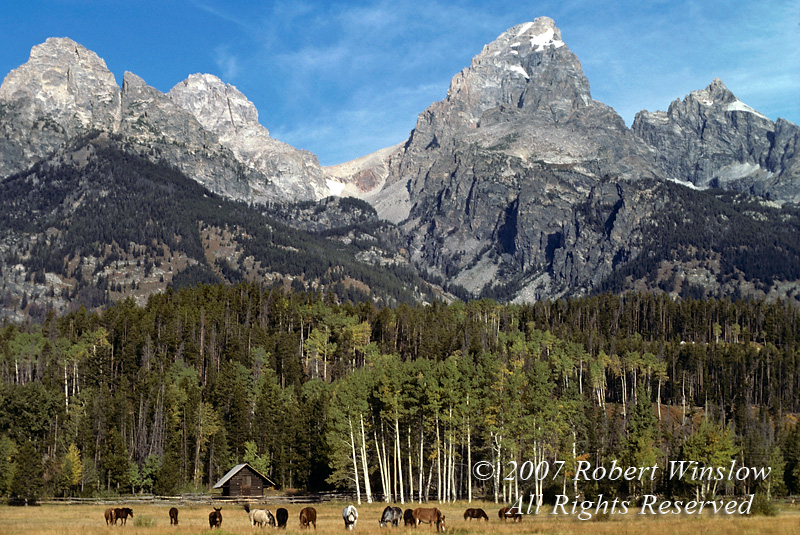 Autumn, Horses, Grand Tetons, Grand Teton National Park, Wyoming, USA, North America